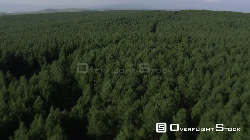 Aerial shot over a forest Nelspruit Mpumalanga South Africa