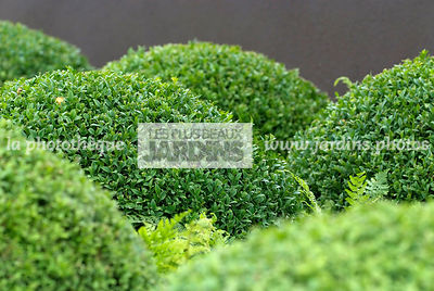 Ball shaped, Bush, Buxus, Contemporary garden, Evergreen, Sphere shaped, Topiary, Common Box, Digital