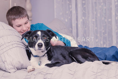 Laughing boy on bed with Border Collie