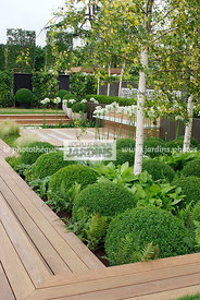 Ball shaped, Betula, Birch, Bush, Buxus, Contemporary garden, Evergreen, Sphere shaped, Topiary, Common Box, Wooden Terrace, ...
