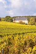 Vollrads castle and vineyards, Rhine valley, Hesse, Germany