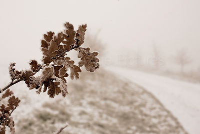 Oak Leaves in Misty Winter Track