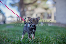 puppy walking in grass with leash on
