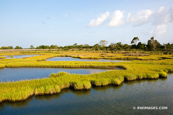 CHINCOTEAGUE BAY MARSH WETLANDS ASSATEAGUE NATIONAL SEASHORE MARYLAND