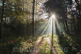 Sun bursting through on to track through woodland North Norfolk autumn