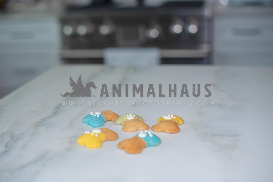 5 dog treats on marble counter in kitchen