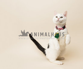 rescue white cat with black markings on bone background