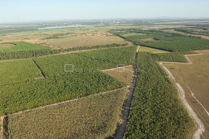 Aerial view of reforestation with exotic species in the Cerrado of Roraima State, near Boa Vista city, Roraima State, Norther...