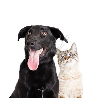 Excited Curious Dog and Cat Closeeup Over White