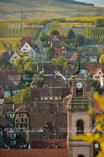 Alsace village, vineyard, Riquewhir,France