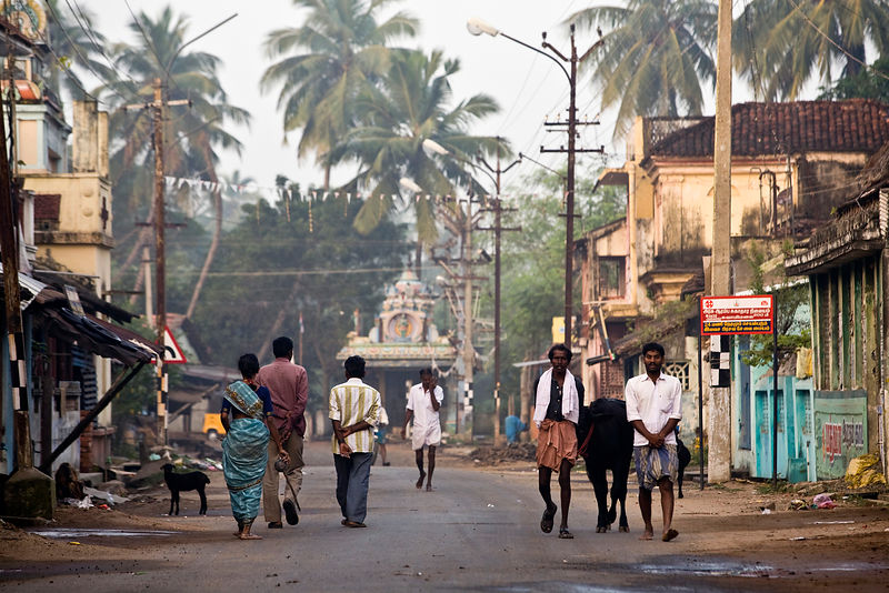 India - Swamimalai - Just after dawn, two farmers lead their cow through the sleepy temple town of Swamimalai