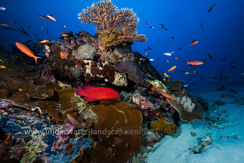 Underwater world in the lagoon of Mayotte