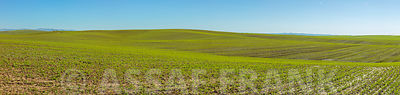 Clear blue sky over green field