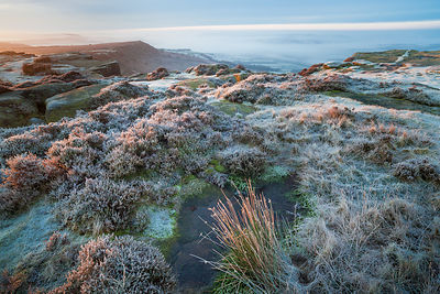 Frosted heather on Curbar Edge