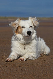 relaxed dog resting on sandy beach