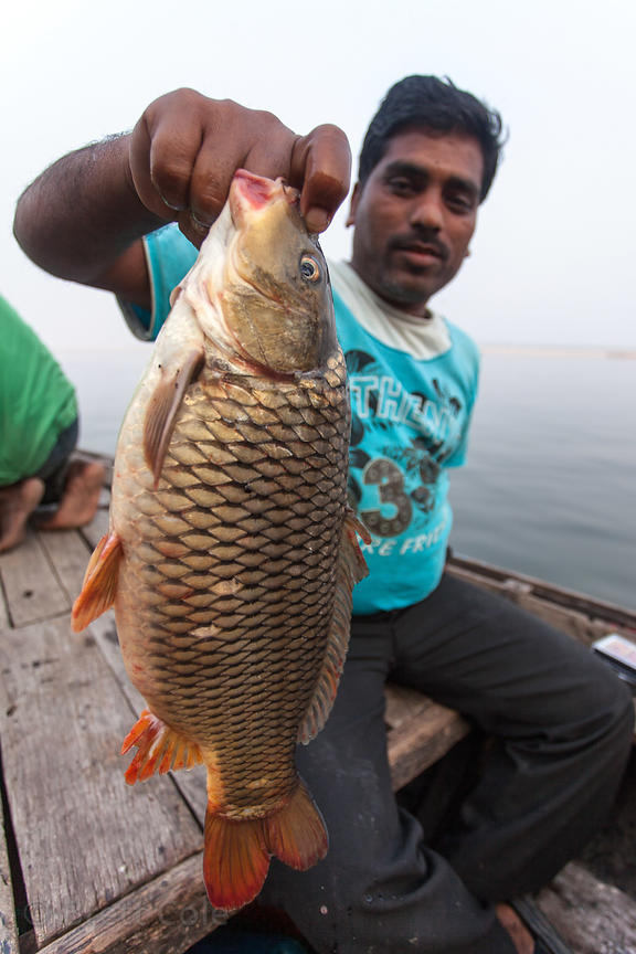 A fisherman holds up a fish on the Ganges River, Varanasi, India.