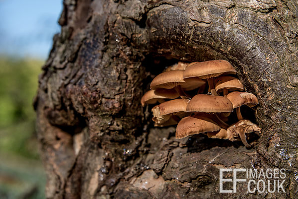 Mushrooms growing On A Tree Trunk