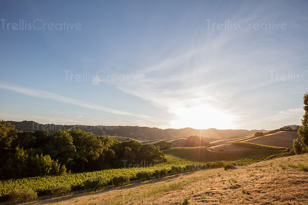 Breathtaking scenery of vineyards at sunrise in Napa Valley, USA