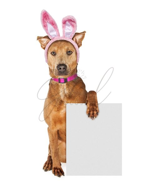 Brown Dog Wearing Easter Bunny Band While Holding Blank Sign