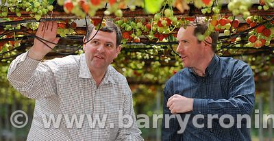 Shane McEntee TD, Minister of State at the Department of Agriculture, Food and the Marine, horticulture, straweberry farm, mc...