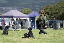 Gun Dog Display