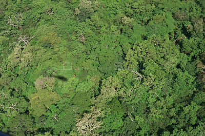 Aerial view of Pacific coast tropical dry forest, Santa Rosa NP, Costa Rica