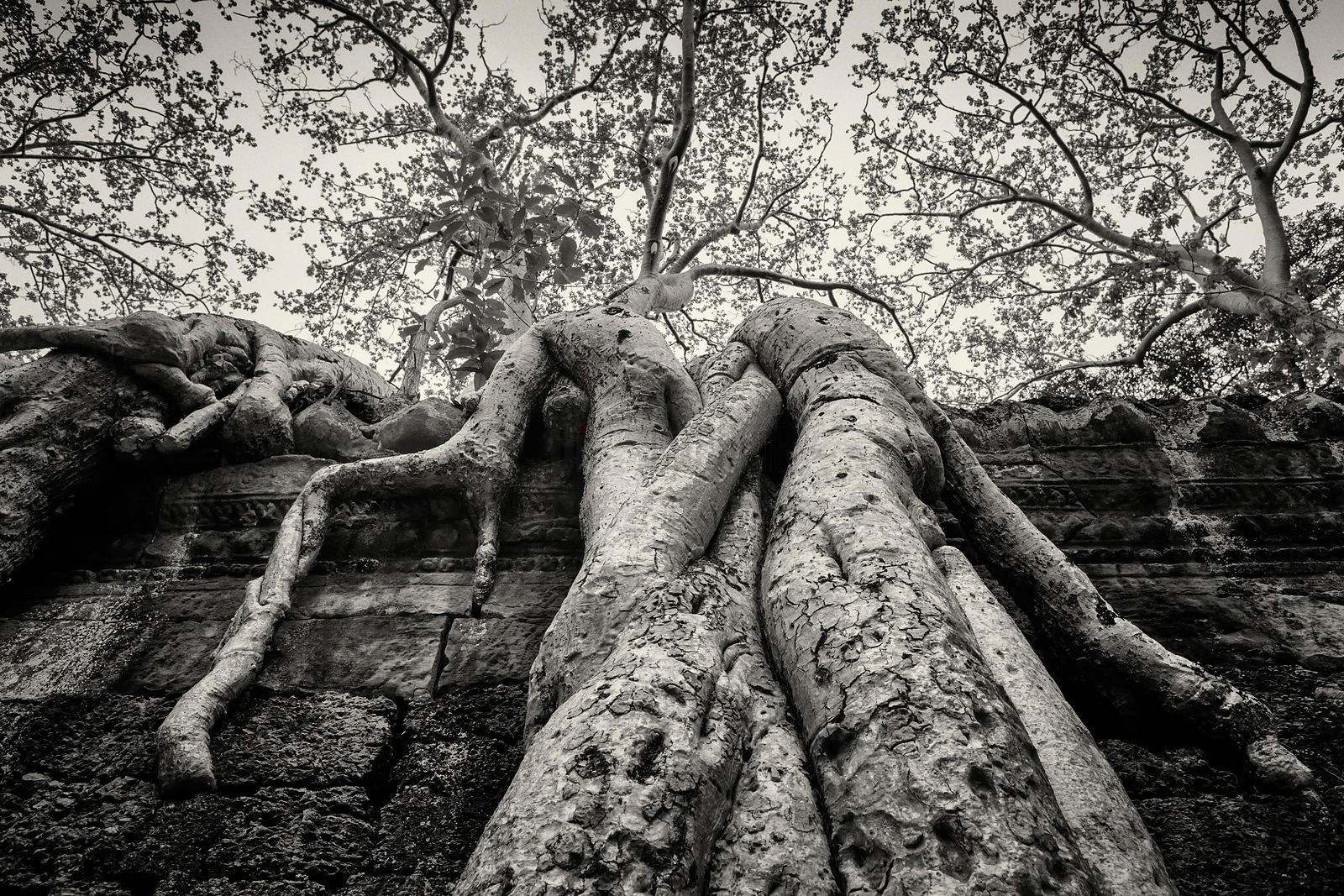 A Trees's Embrace — Roots of a Tree at Ruined Temple