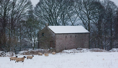 Sheep in snow near Longstone Edge