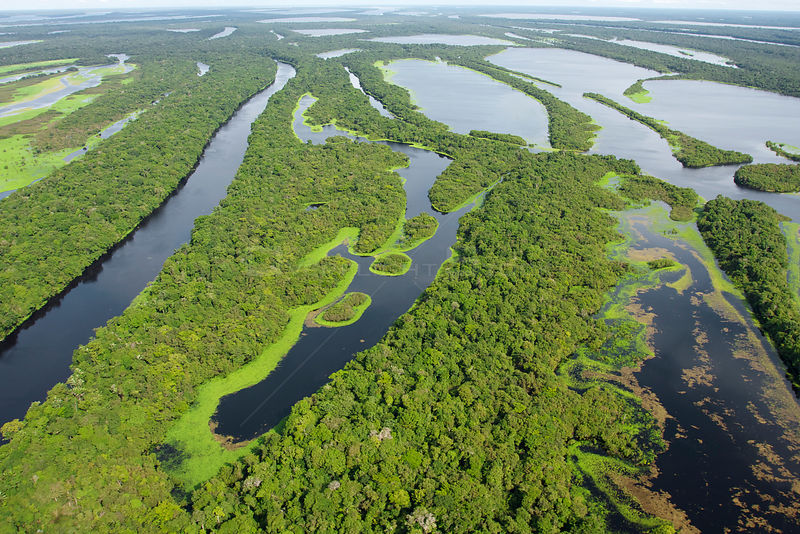 Aerial view of the flooded forest of Anavilhanas Archipelago, Anavilhanas National Park, in the Rio Negro, Amazonas, Brazil F...