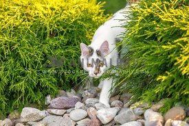 cat walking outside through bushes and rocks