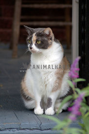 calico cat sitting on a porch