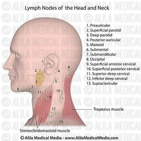 Lymph nodes of the head and neck, labeled.