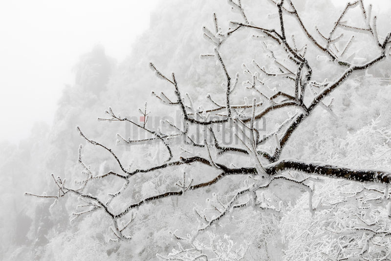 Tree Branches in Huangshan Mountain Scene after Heavy Snowfall