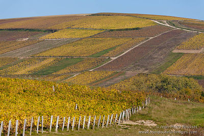 Sancerre Vineyards