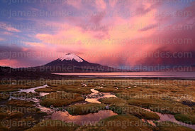 Parinacota volcano and bofedales on shore of Lake Chungará at sunset, Lauca National Park, Region XV, Chile