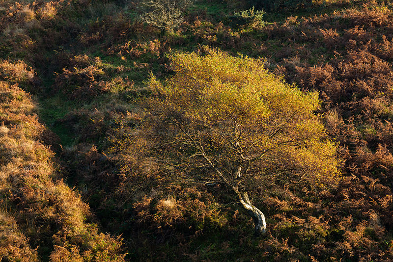 Autumn colours on moorland near Stoke Pero, Exmoor National Park, Somerset, England, UK, October 2015.