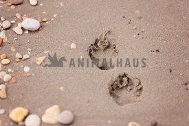 dog pawprints on sandy beach