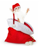 Funny Kitten Jumping Out of Santa Christmas Gift Bag