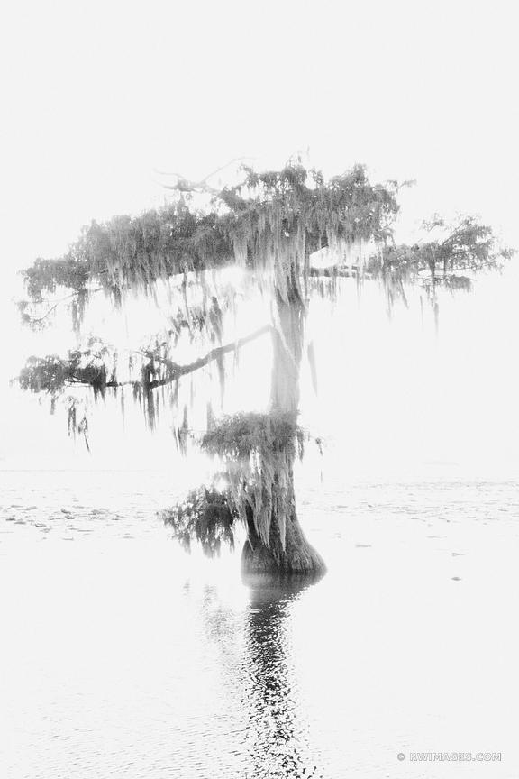 LAKE MARTIN LOUISIANA SWAMP BLACK AND WHITE