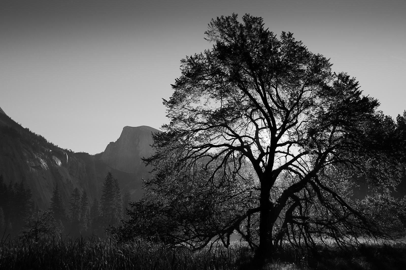 Half Dome: photo noir et blanc Yosemite USA