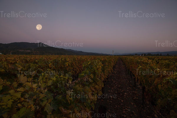 Vineyard field with full moon in the sky at night, Napa Valley