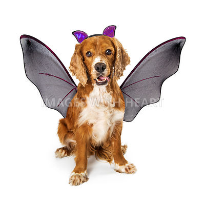 Dog Weating Bat Halloween Costume