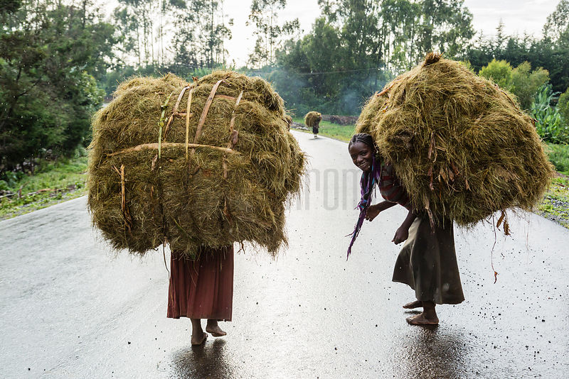 Woman Carrying Loads of Hay on their Backs