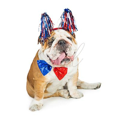 Funny American Patriotic Fourth Of July Dog