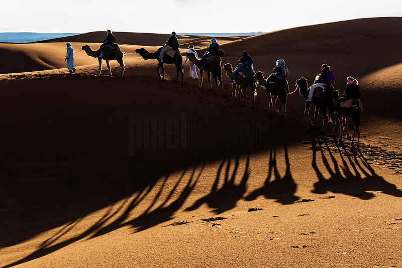 Tourists on Camel Ride in Western Sahara at Dawn