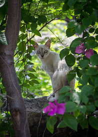 young cat standing ready to run away hidden behind bushes