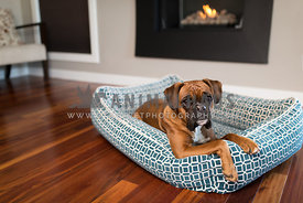 red boxer dog laying in designer dog bed in front of fireplace