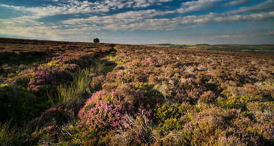 Summer on Eyam moor