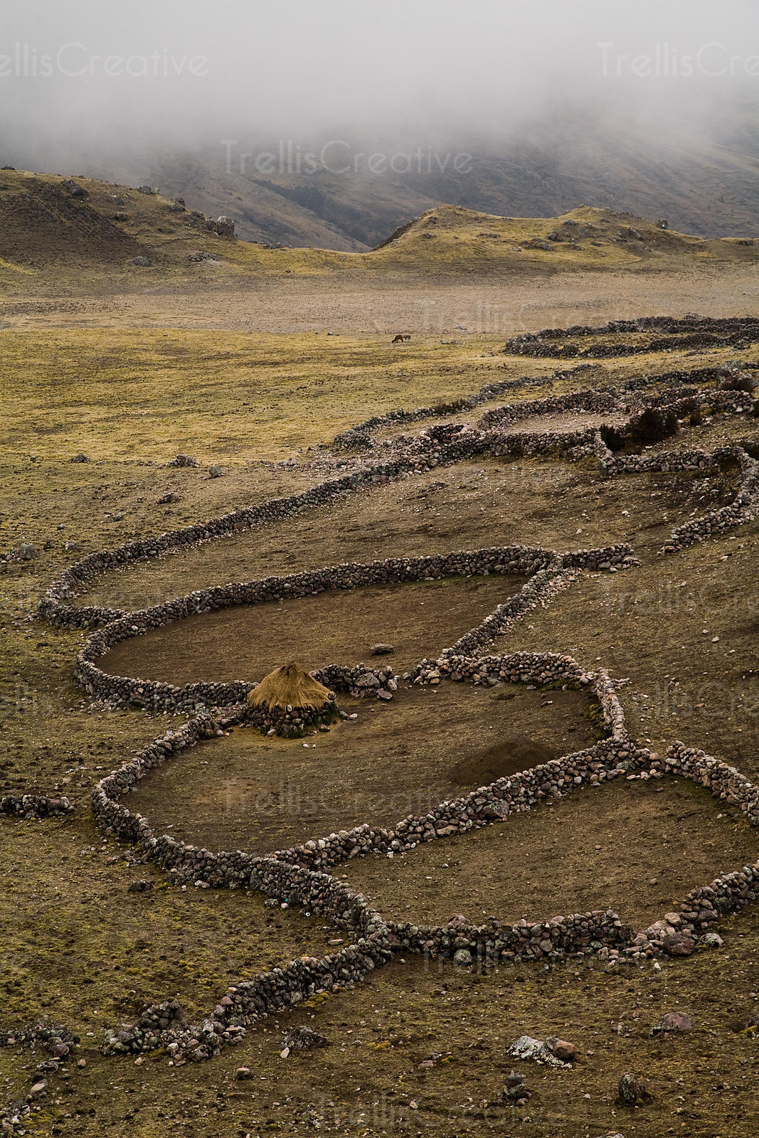 The stone wall rings provide protection from predators when nomadic herders need to rest overnight, Lares Trek, Andes Mountai...