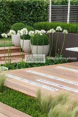 Agapanthus, Contemporary garden, Perennial, Perennial rhizome, White, Wooden Terrace, Digital